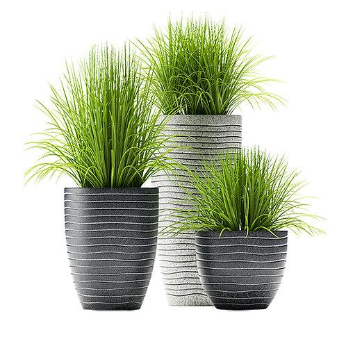 Plants 06