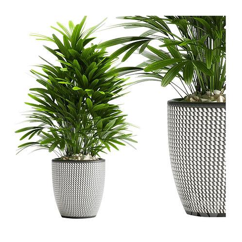 Plants 07