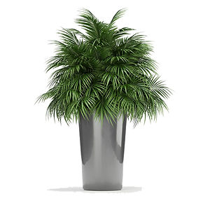 virtual staging designer virtual furniture and plants for virtually staged rooms
