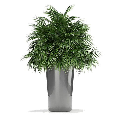 Plants 08