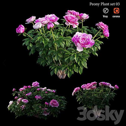 Inground Plants 05