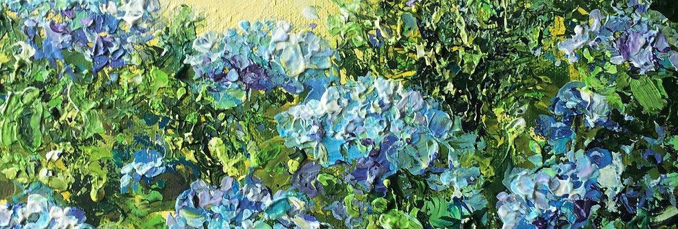 Blue hydrangeas no2