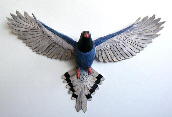 Taiwan Magpie