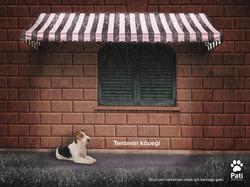 Tentenin köpeği