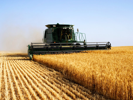 Relação entre atividade respiratória, perda de matéria seca e qualidade dos grãos armazenados