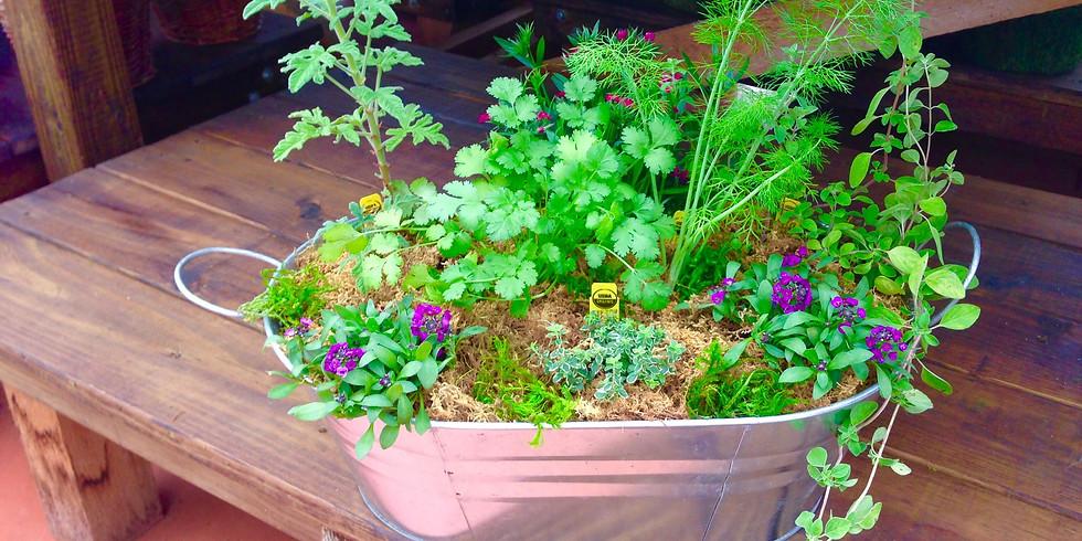 Herb or Veggie Garden in a Tub