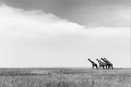 Overlooking the savannah (AE011)
