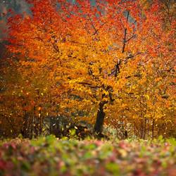 Autumn (MT003)