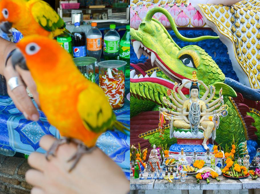 4- Left- Birds at Chiang Rai Market ; Ri