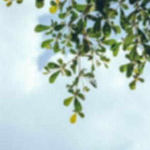 Leaves in blue sky