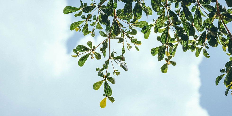 Let's Talk About Our Trees