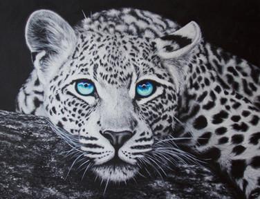 Blue eyed leopard (Sold)