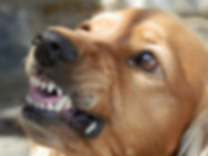 כלב נושך 2.jpg