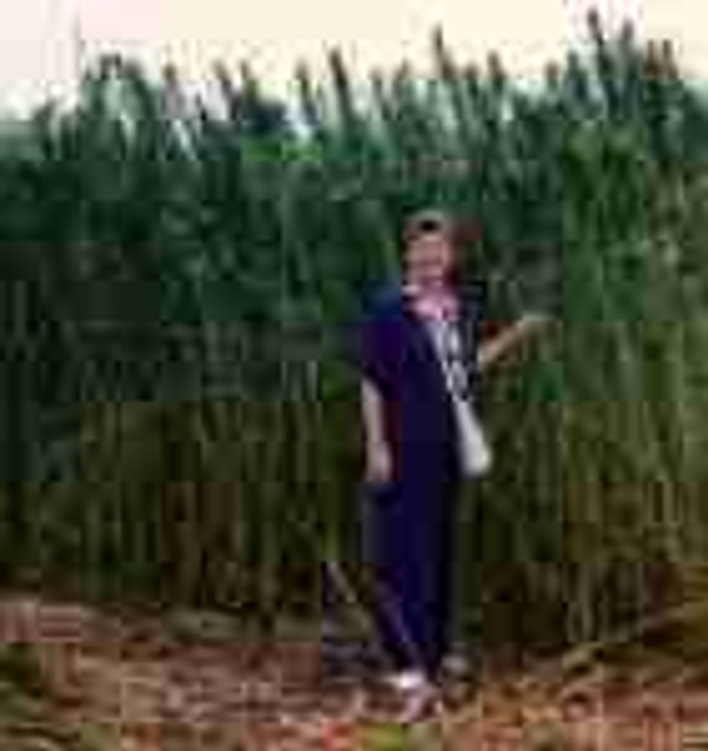 Cynthia Thielen in Hemp field