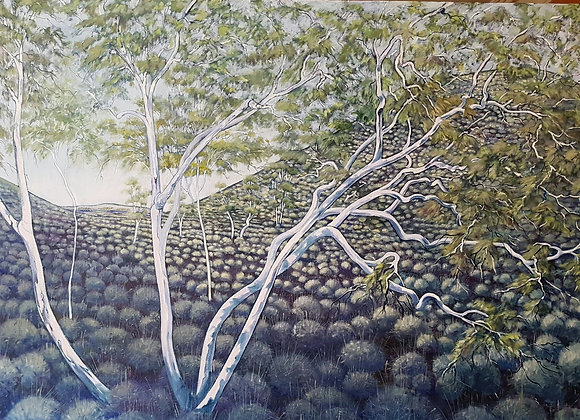 1636.  Snappy Gums in Blue Hues