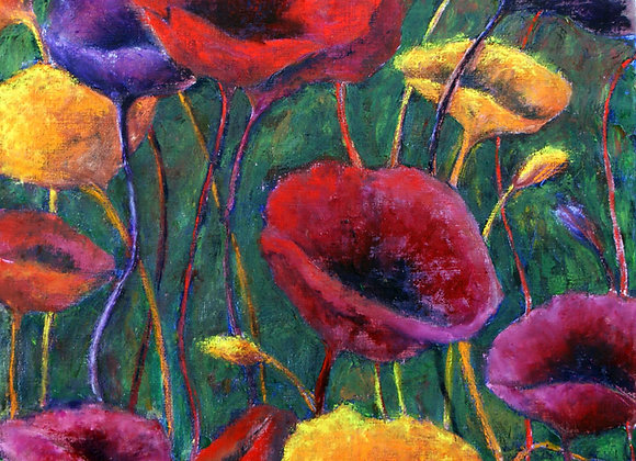 1364. Poppies on show
