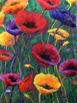 1364 Poppies on show