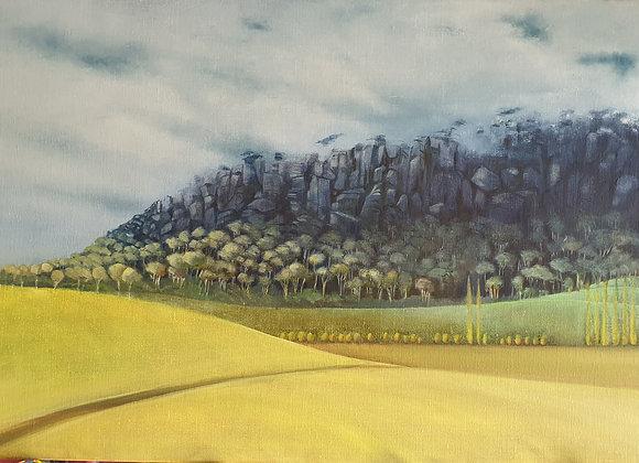 1695. Mt Roland Tasmania