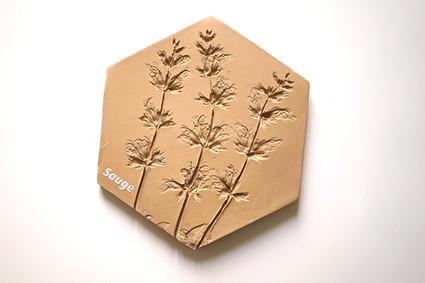 Herbier céramique