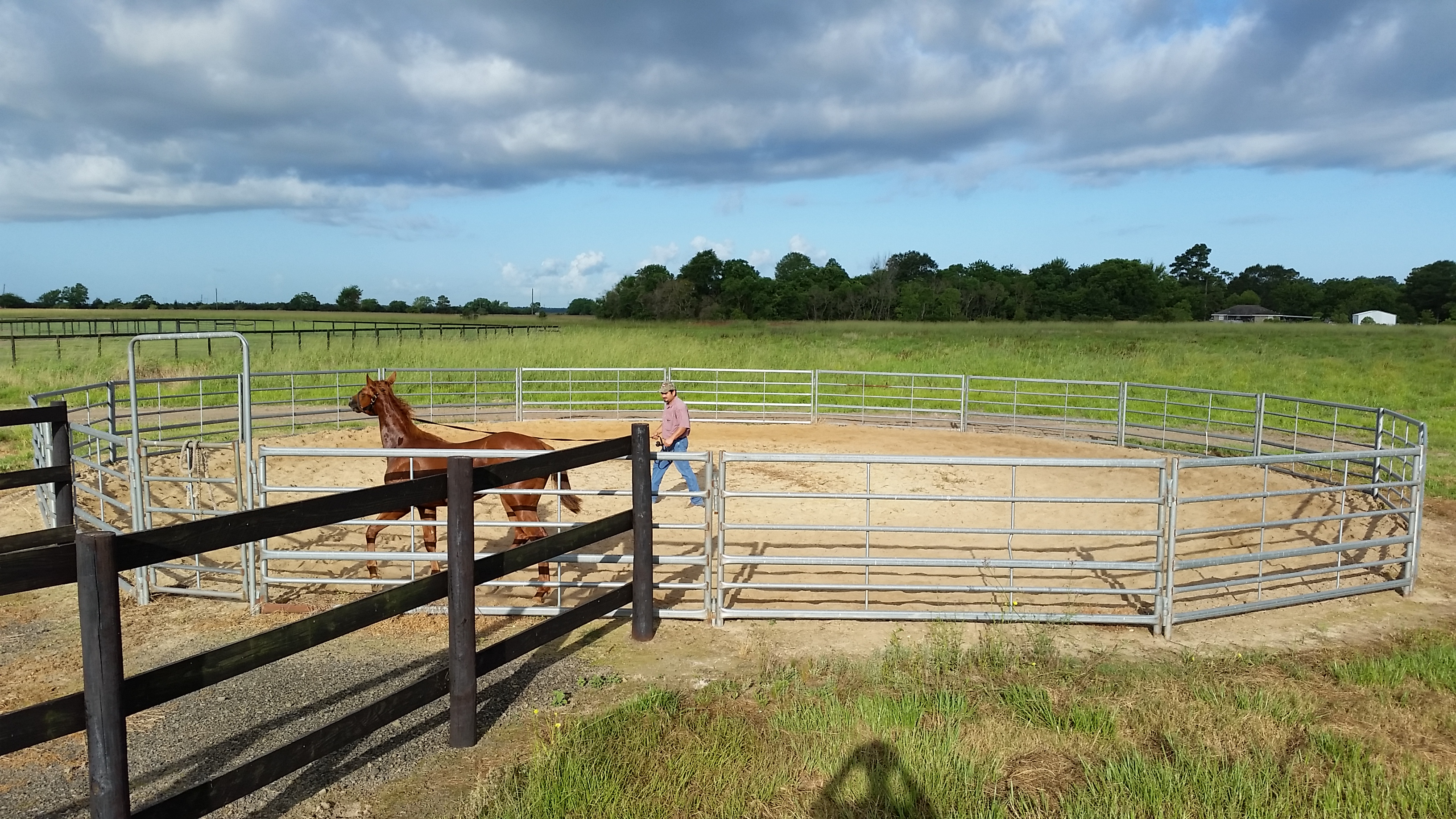 Horse Sales Prep