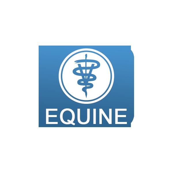 Equine Veterinarian Hospital