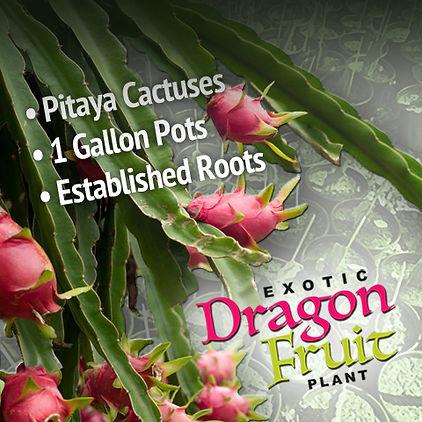 Pitaya-Cactuses-1-Gallon.jpg