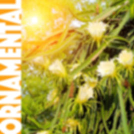 ORNAMENTAL-2.jpg