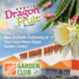 Dragon-Fruit-Home-Depot-1.jpg