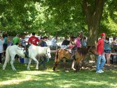 Savage Fest Pony Rides