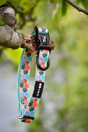Rainbow Dotty Collar