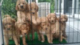 PuppiesOnFence.jpg