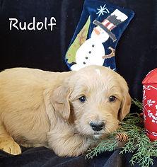 RUDOLF 2.jpg