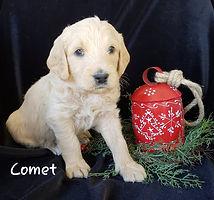 C0MET 2.jpg