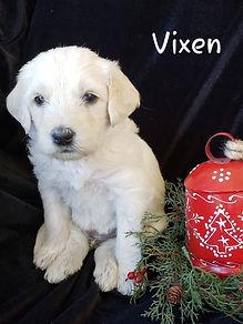 VIXEN 2.jpg