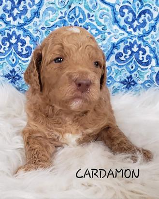 Cardamon wk. 3.jpg