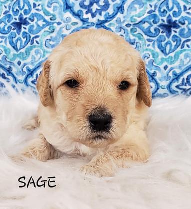 Sage wk.3.jpg