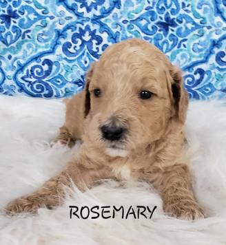 Rosemary wk.3.jpg