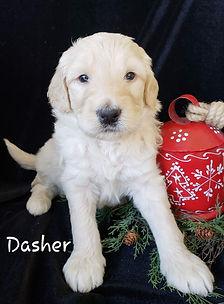 DASHER 2.jpg