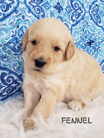 Fennel wk. 3.jpg