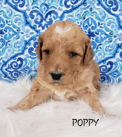 Poppy wk. 3.jpg