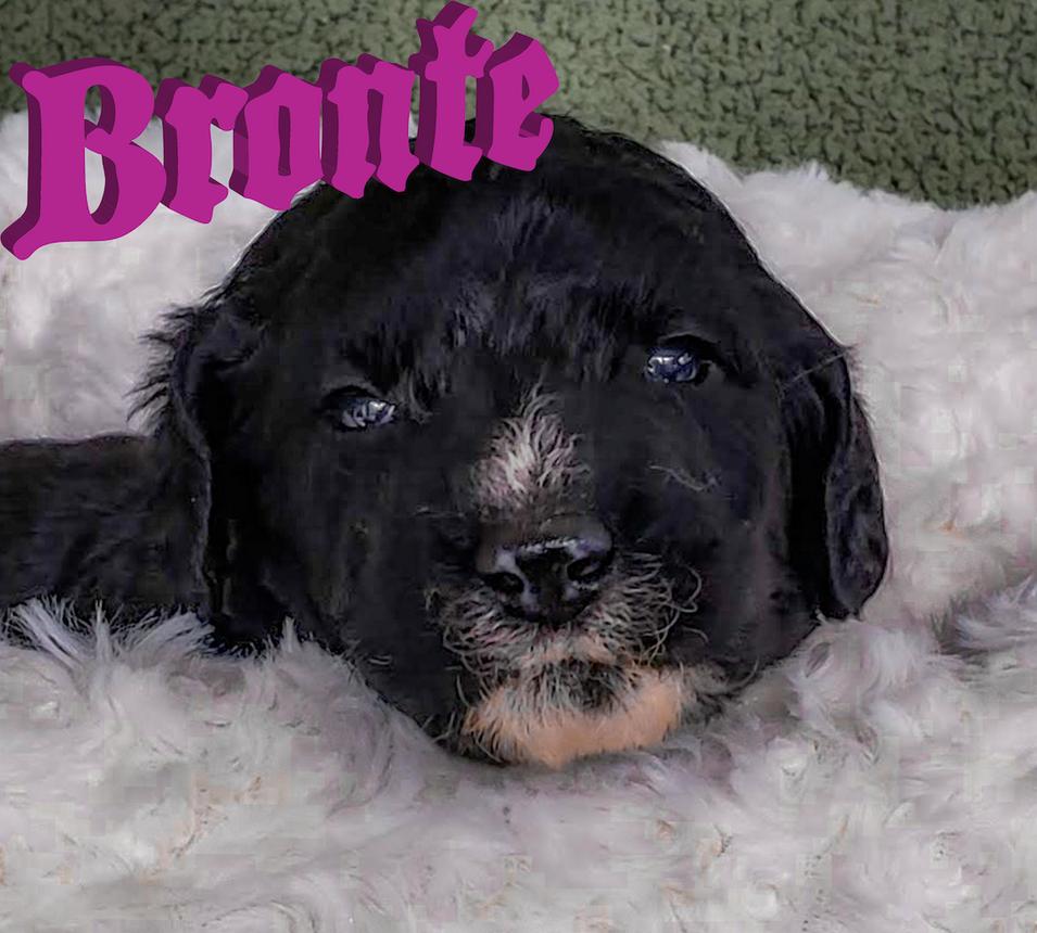 Bronte3wk.png