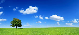 Sky-tree-grassiStock7201305XLarge.jpg