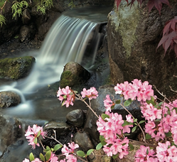 Anderson Japanese Gardens Spring.png