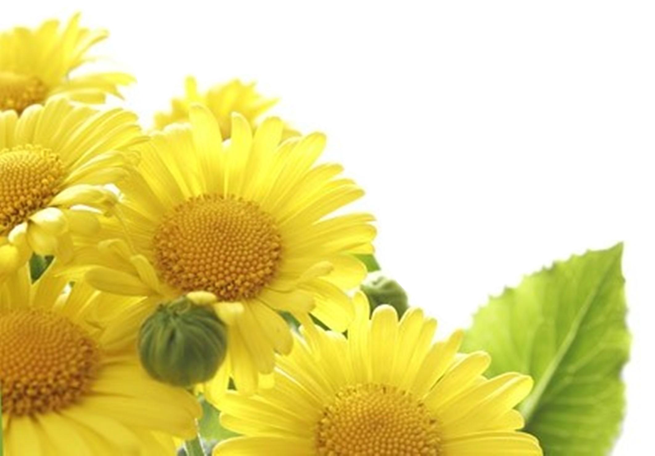 sunflower_fine_picture_166699