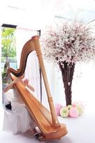 S8R (8x12) - Harp.jpg