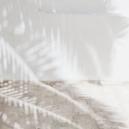 Shadow tree.jpg