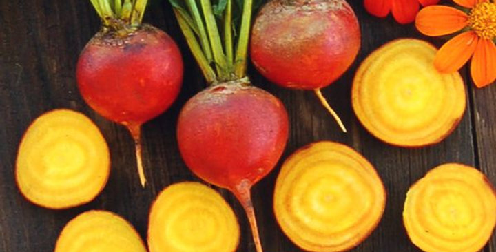 Yellow Beets- 6-pack