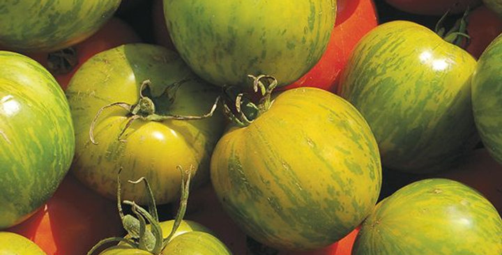 Heirloom Tomato- Green Zebra