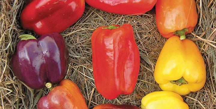 Sweet Pepper- Rainbow