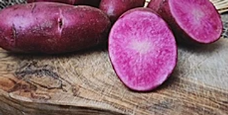 Red Fingerling Seed Potatoes- Red Thumb
